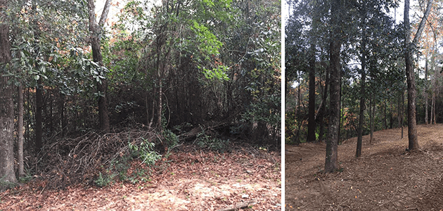 Bush Hogging Before and After