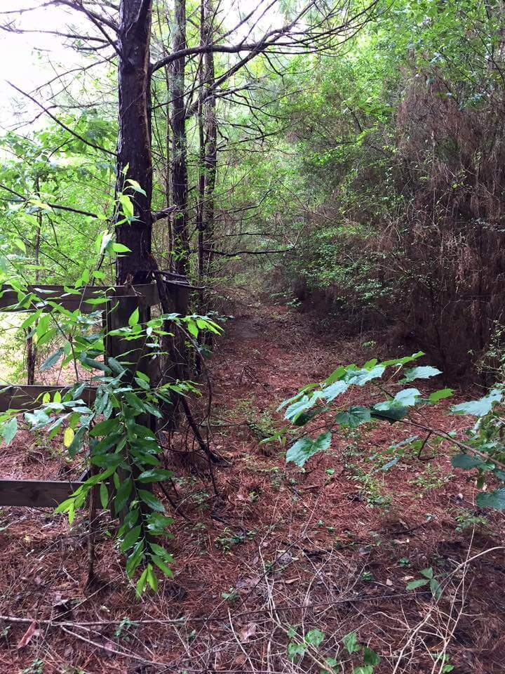 Property Line Clearing Before