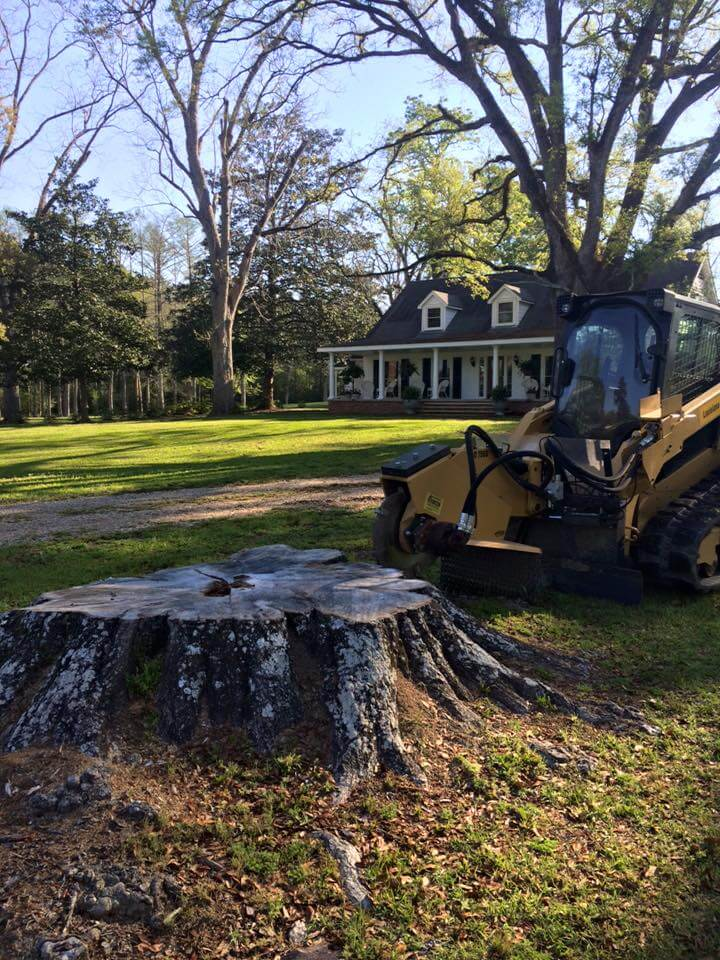 Stump Removal Before