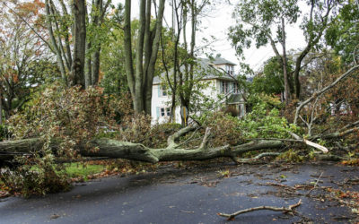 Steps To Take Immediately After Storm Damage